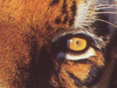 Tigervision General Showreel